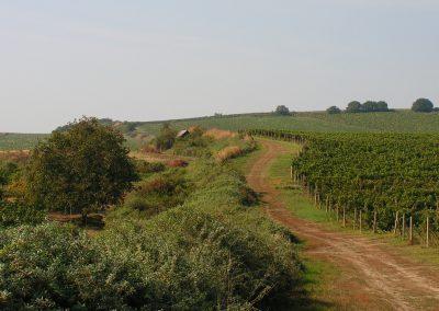 Mezi vinohrady 2-min