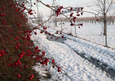 Mezi vinohrady-min